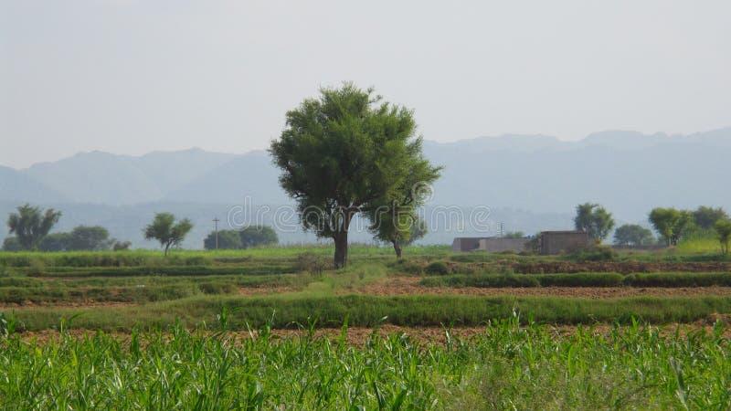 Kahoon谷 库存图片