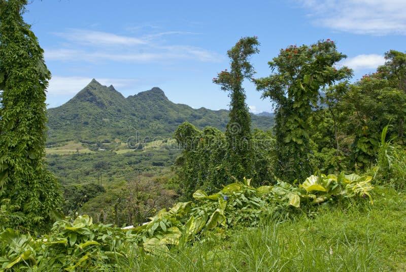 Kailua, Oahu, Hawaii scenic valley