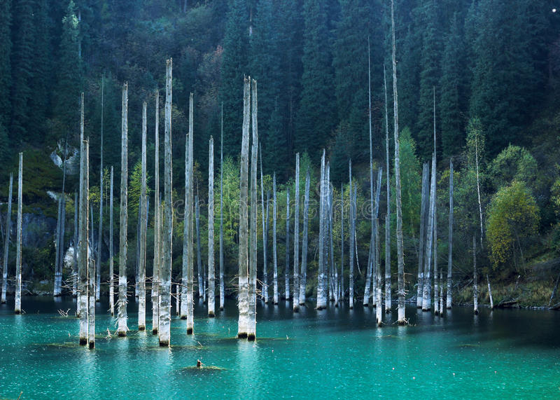 Kaindy Lake with birches in Tien Shan mountain, Akmaty, Kazakhstan. Kaindy Lake with birches in Tien Shan mountain, Akmaty, Kazakhstan stock photos