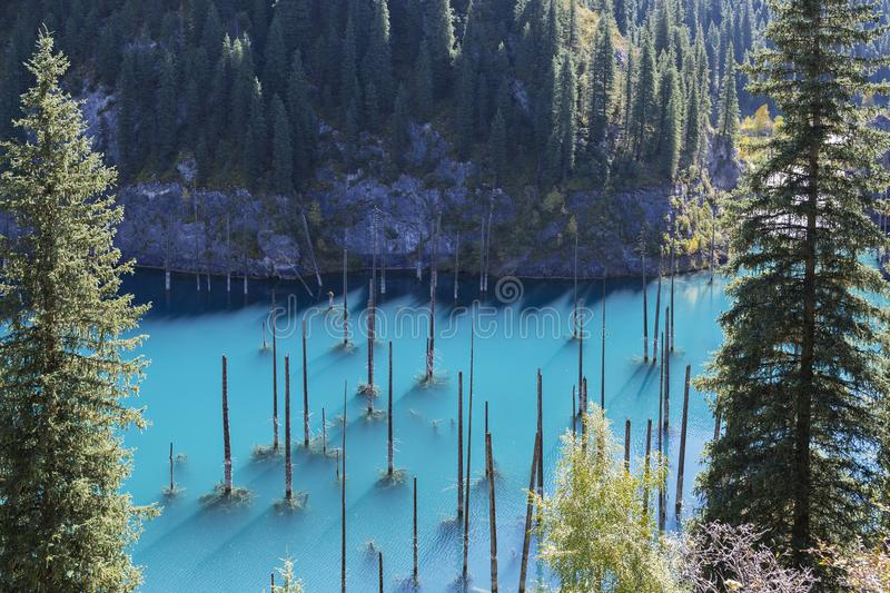 Kaindy Lake with spruce tree trunks coming out from its water, in Kazakhstan. Kaindy Lake in Kazakhstan known also as underwater forest royalty free stock image