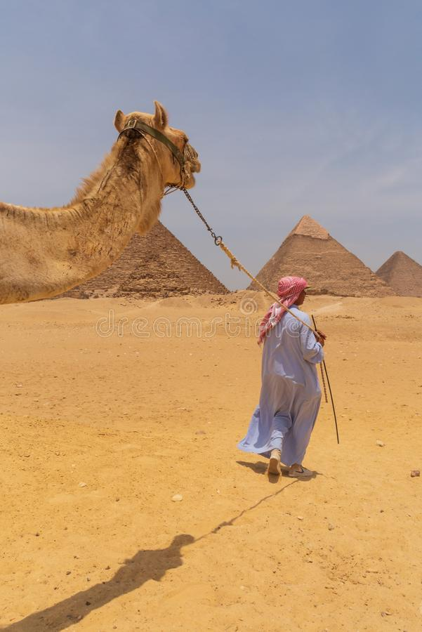KAIRO EGYPTEN - MAJ 22, 2017: Arabisk man som kör kamlet på det Giza pyramidkomplexet arkivbild