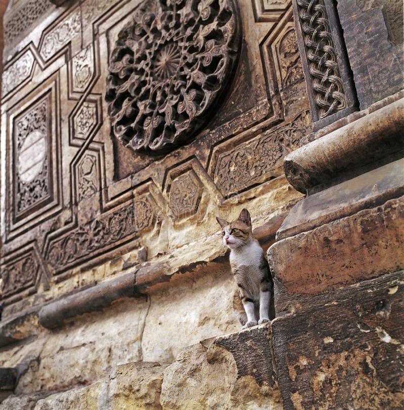 Kairo-Katze lizenzfreie stockfotos