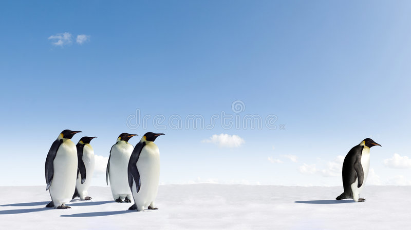 Kaiser-Pinguine in Antarktik stockbilder