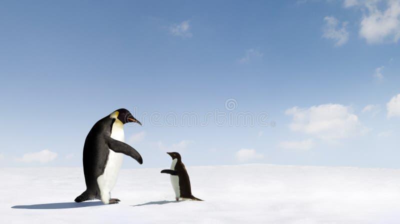 Kaiser und Adelie-Pinguine stockbild