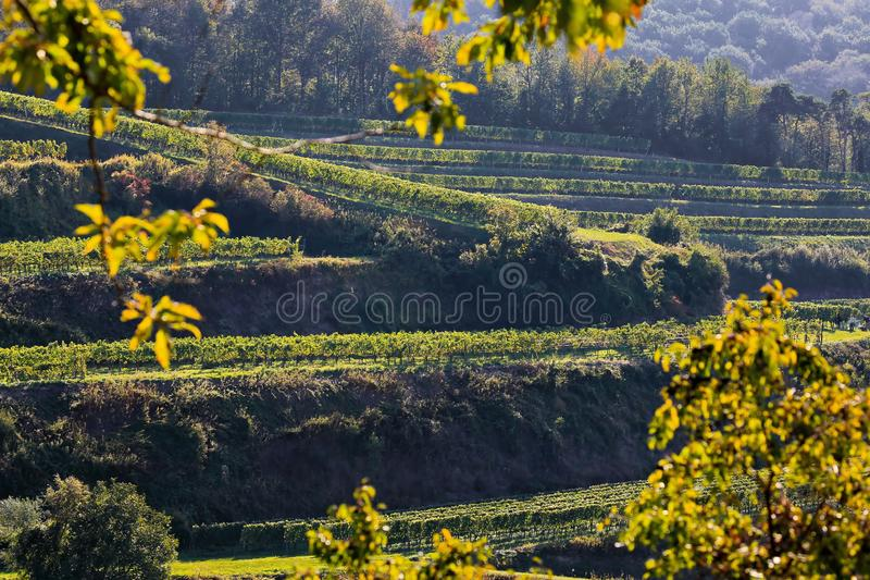 Kaiserstuhl выращивающий вин регион в Германии стоковая фотография rf
