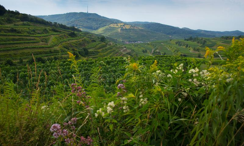 Kaiserstuhl area in Germany. View from the Mondhalde in the Kaiserstuhl area in Germany stock photography