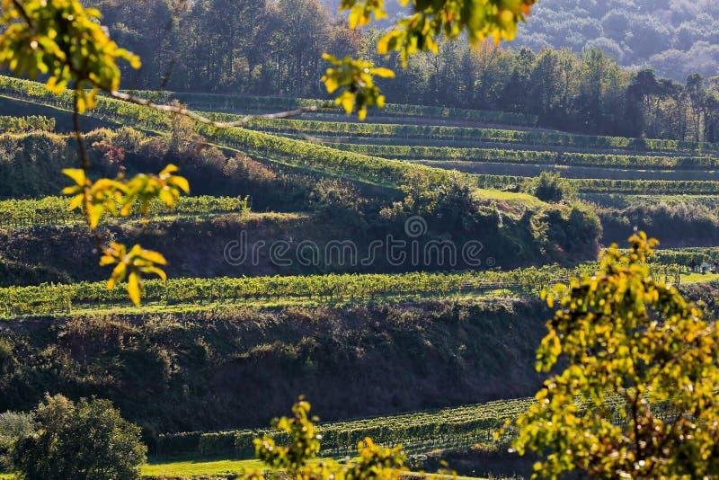 Kaiserstuhl is een wijnbouwgebied in Duitsland royalty-vrije stock fotografie