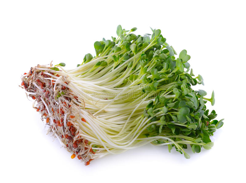 Kaiware sprout, japanese vegetable or watercress. On white background stock photos