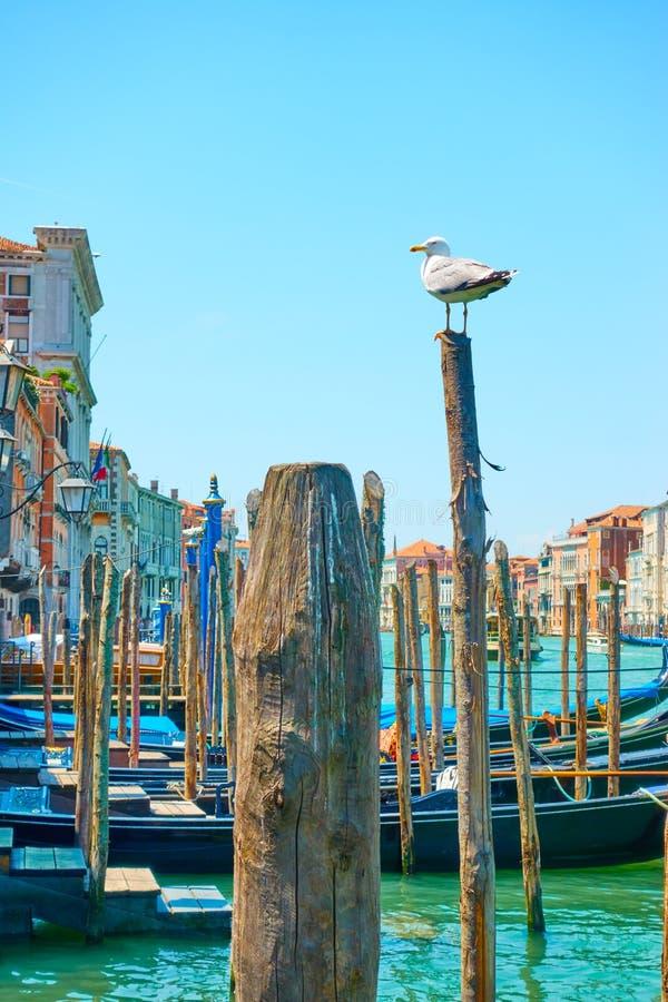 Kaj för gondoler i Venedig fotografering för bildbyråer