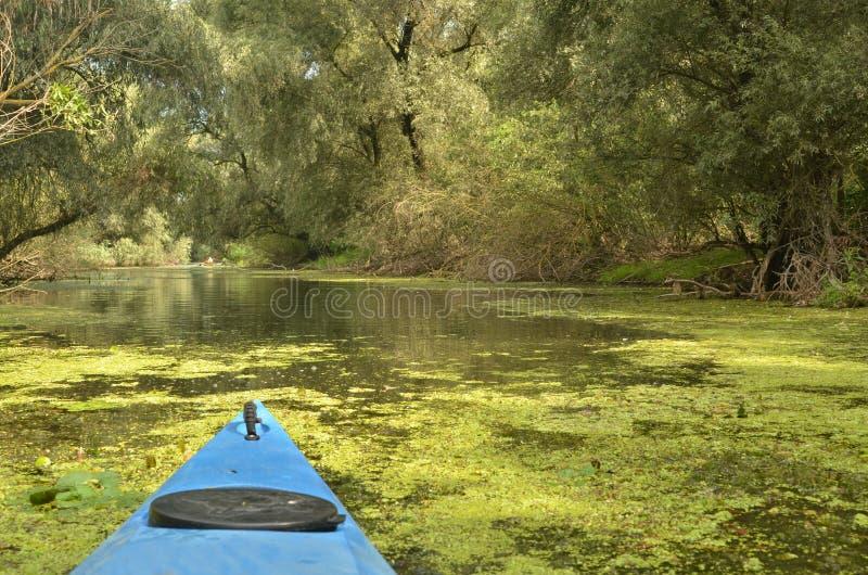 Kajak in de delta van Donau royalty-vrije stock foto
