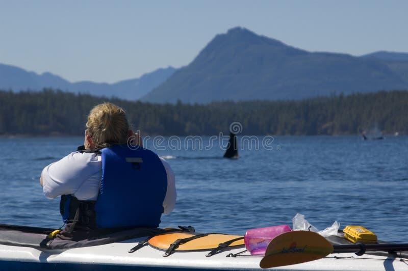 Kajak e orca immagine stock libera da diritti