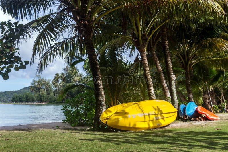 Kajak onder kokospalmen stock foto