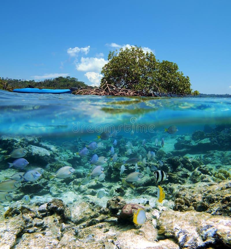 kajak som snorkeling fotografering för bildbyråer