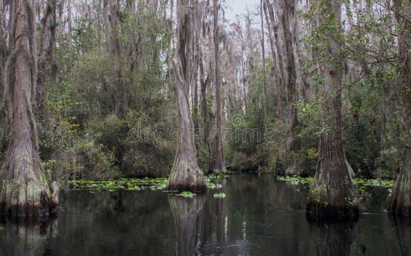 Kajakowy kajaka ślad, Okefenokee bagna obywatela rezerwat dzikiej przyrody zdjęcia stock