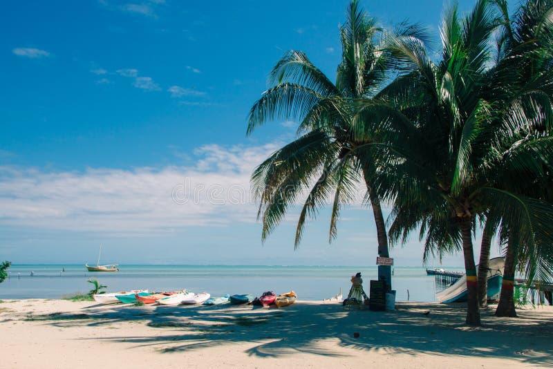 Kajaks de alquiler multicolores del mar en la playa tropical en Sunny Day fotografía de archivo