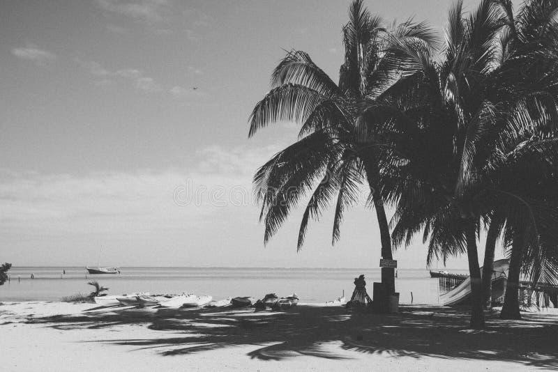 Kajaks de alquiler multicolores del mar en la playa tropical en Sunny Day imagen de archivo