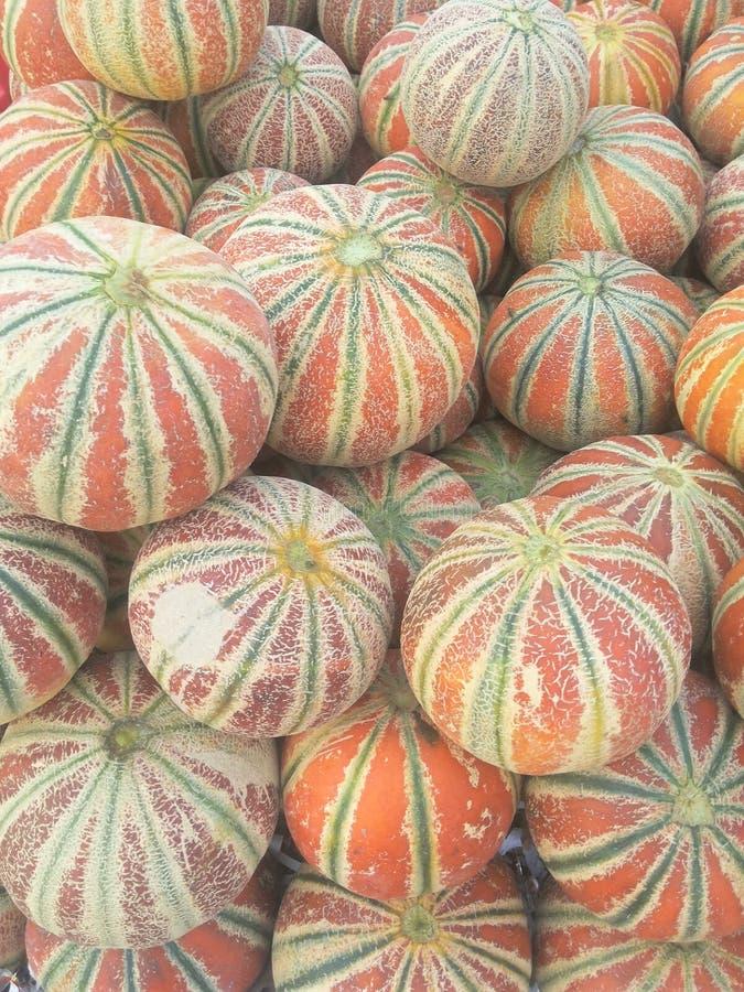 Kajari melon stock photography
