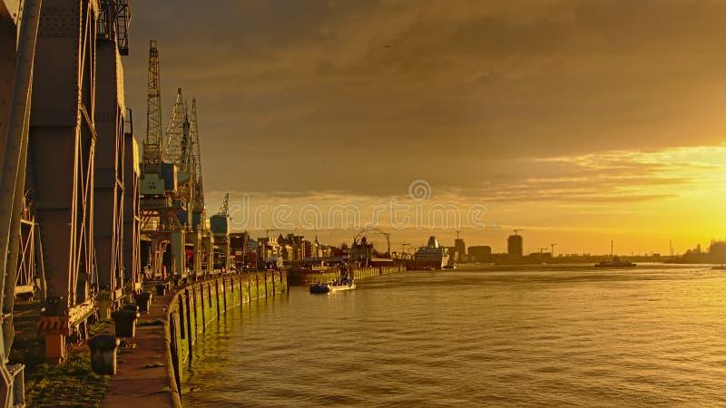 Kajer av floden Scheldt i Antwerp, med den gamla industriella kranar och domkyrkan i thbakgrund i varmt solnedgångljus royaltyfria bilder