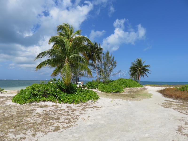 Kajman wyspy zdjęcia stock