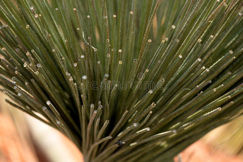 Kajood. Natural material in thailand for production use Wicker stock photos
