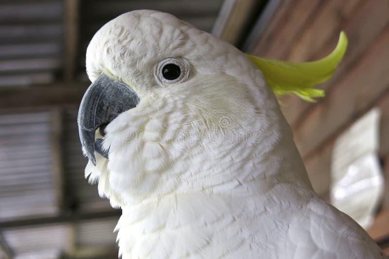Kakadu, Αυστραλία στοκ φωτογραφία