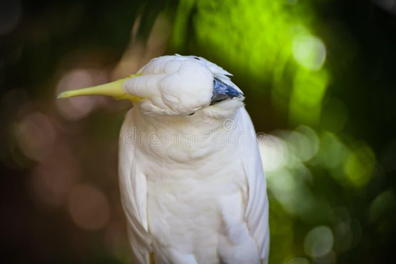 Download Kakadu obraz stock. Obraz złożonej z natura, jaskrawy - 57665137