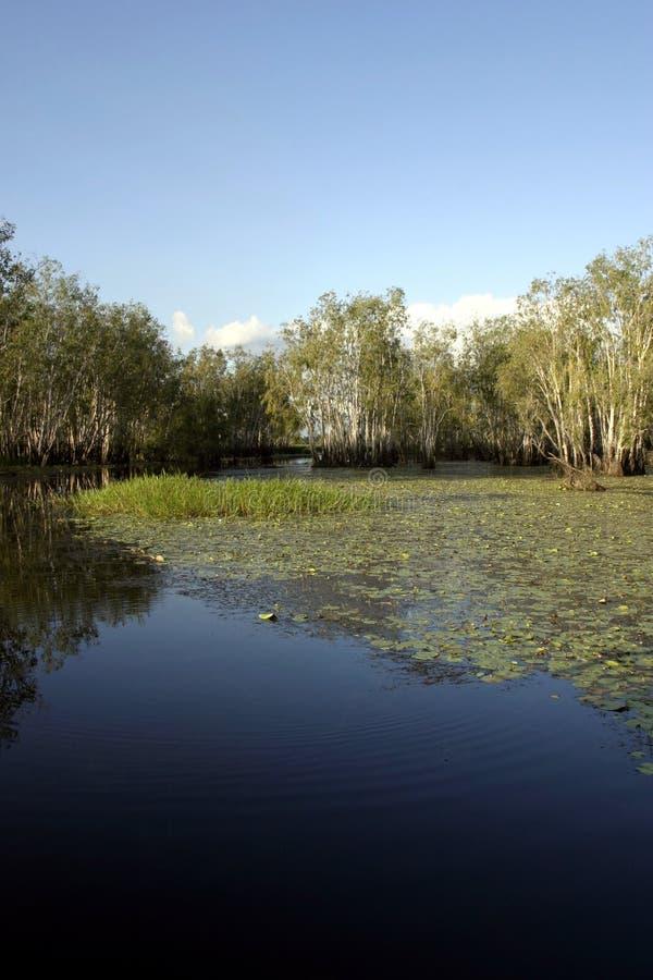 Kakadu Billabong. A Billabong in Kakadu, Northern Territories, Australia...home to Saltwater Crocodiles royalty free stock image