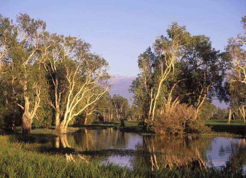 Kakadu national park. Kakadu national park Northern Territory, Australia royalty free stock image