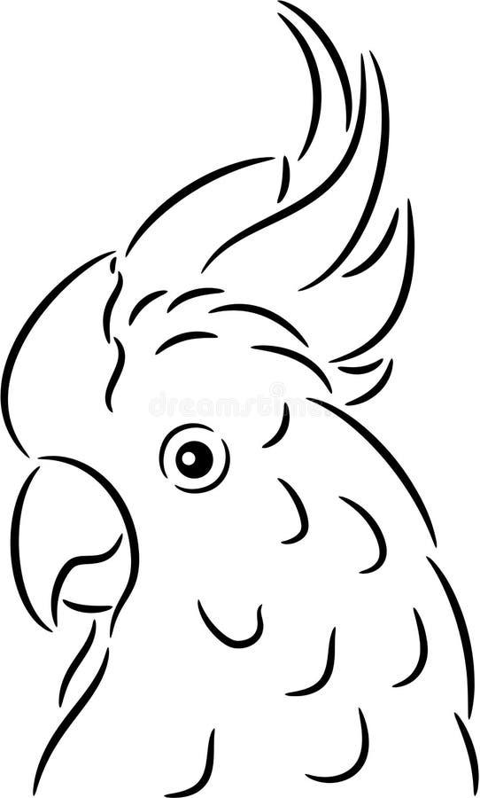 cockatoopapagei vektor abbildung illustration von weiß