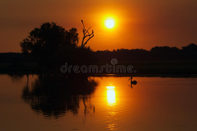 Kakadu Sunset. Magical sunset over the Yellow Water Billabong with pelican silhouetted against the peaceful water, Kakadu national park, Northern Territory stock photos