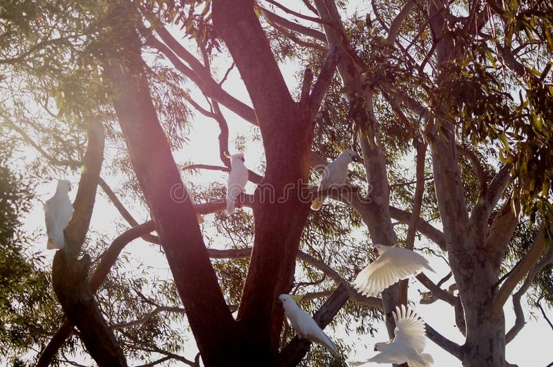 Kakadu royalty free stock photos