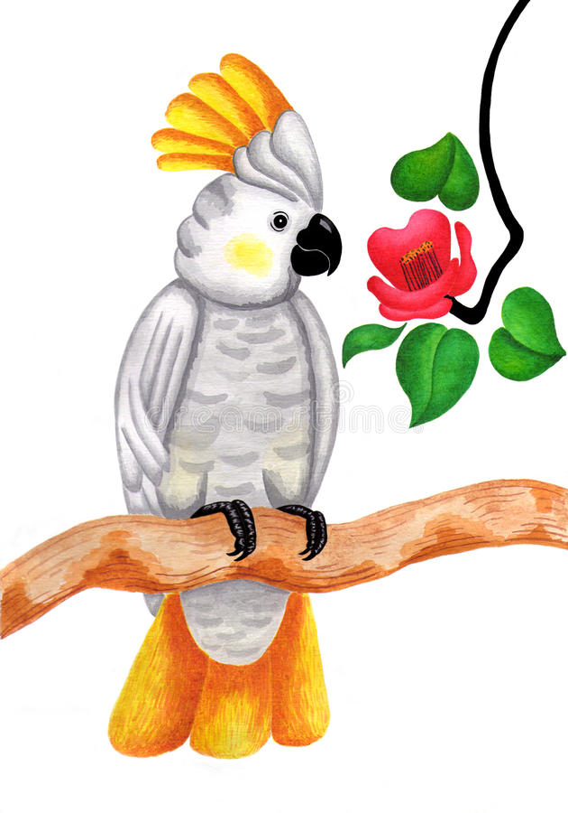 kakadua royaltyfri illustrationer