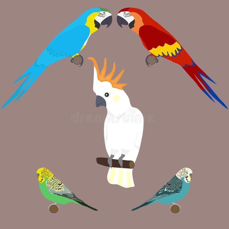 Kakadua ara, krabb papegoja En uppsättning av papegojor royaltyfri illustrationer