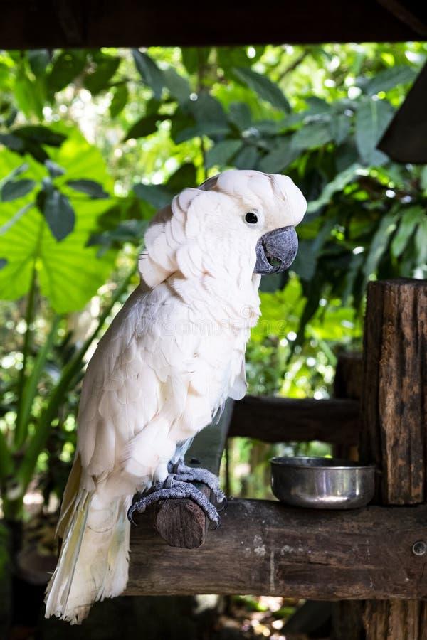 Kakaduapapegoja i vändkretsarna royaltyfri bild