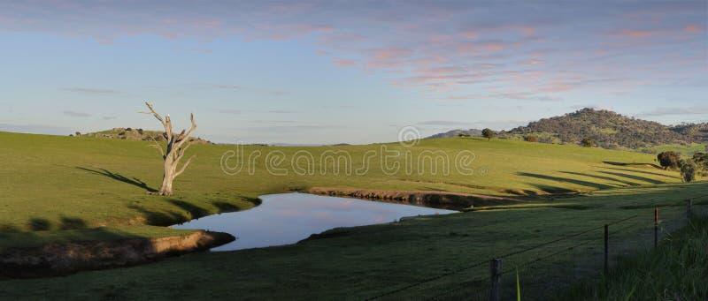 Kakaduaroost på ett bevattna hål Wyangala royaltyfri foto