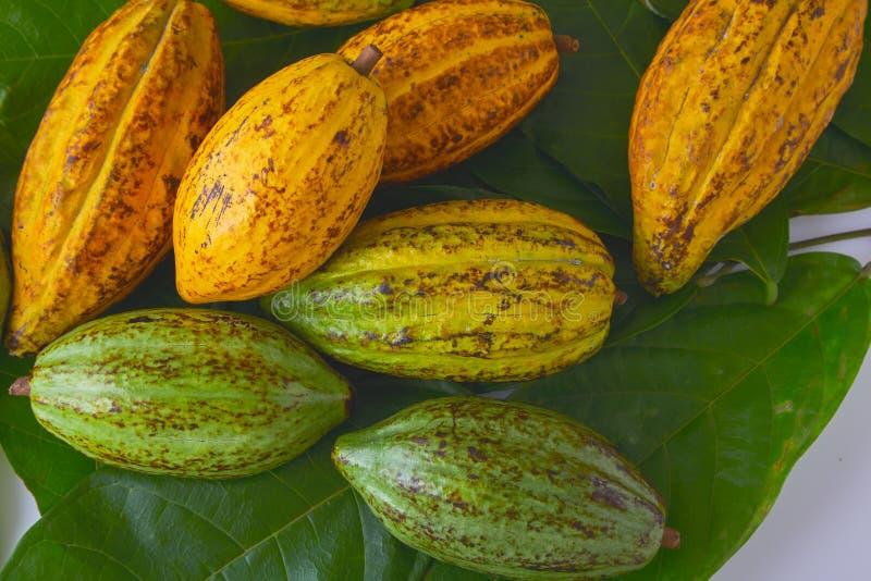 kakao świeży zdjęcie royalty free