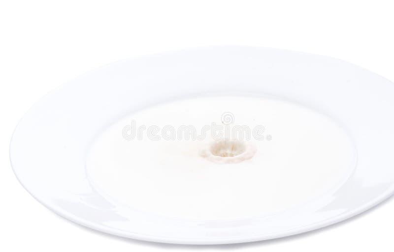 Kakao mjölkar färgstänk i platta med mjölkar Horisontalnärbildbild som isoleras över vit arkivfoto