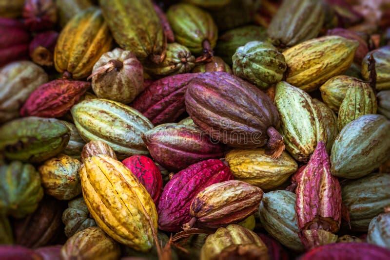 Kakao strąki zdjęcia stock