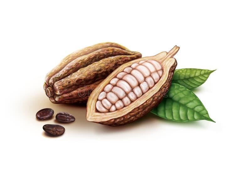 Kakao strąki, kakaowe fasole i liście, ilustracja wektor