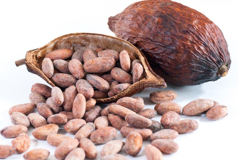 Kakaobönor och kakaofrukt på vit arkivfoton