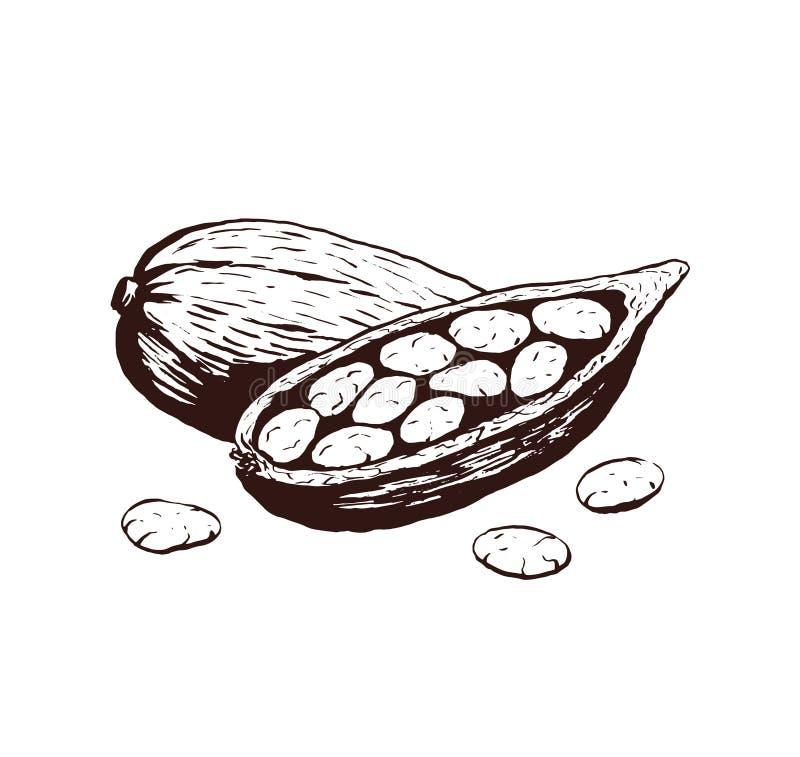 Kakaobönor skissar färgpulvervektorillustrationen stock illustrationer