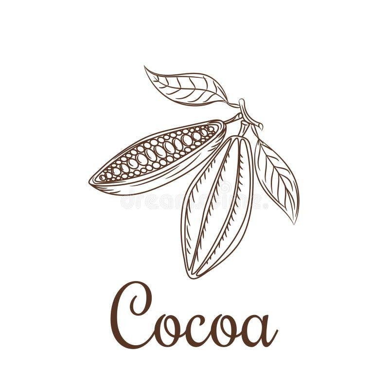 Kakaobönor skissar vektorillustrationen royaltyfri illustrationer