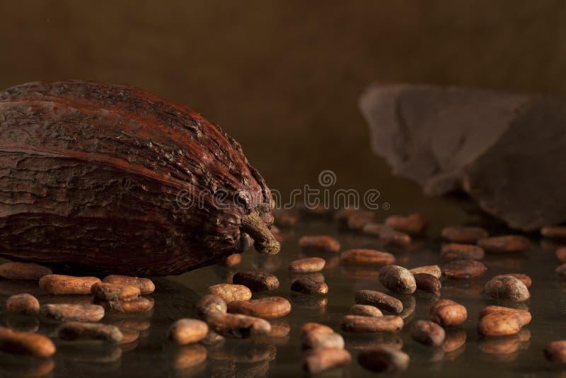 Kakaobohne mit Schokolade stockbilder