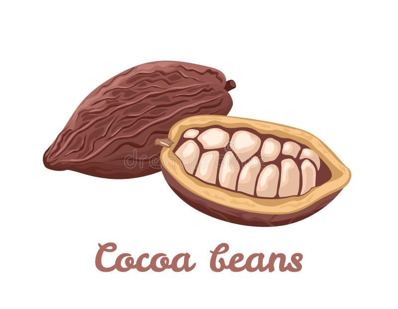 Kakaobohneikone Vektorillustration von superfood stock abbildung