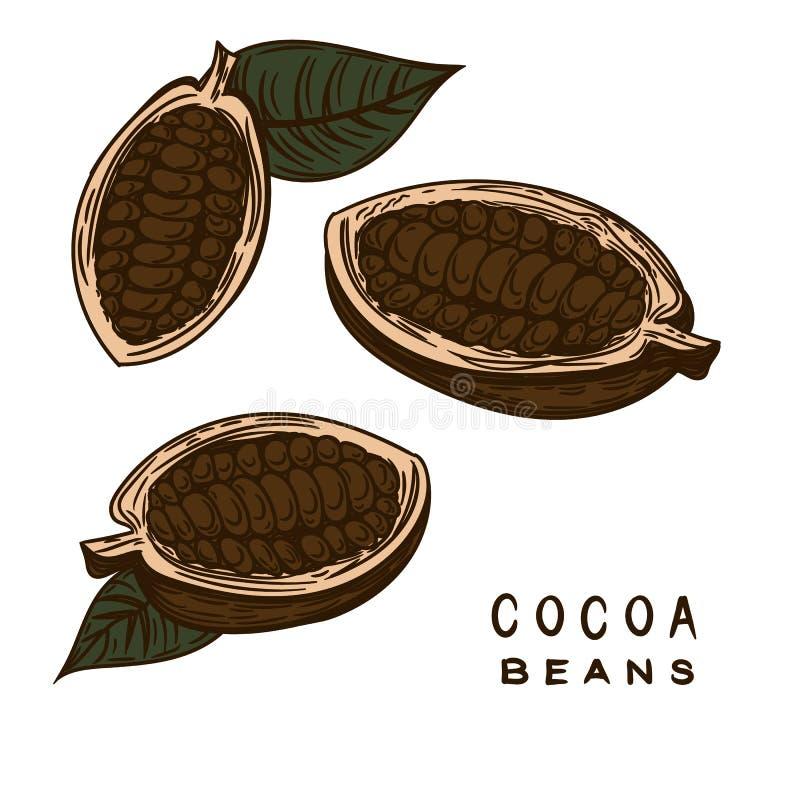 Kakaobohnen übergeben gezeichnet vektor abbildung
