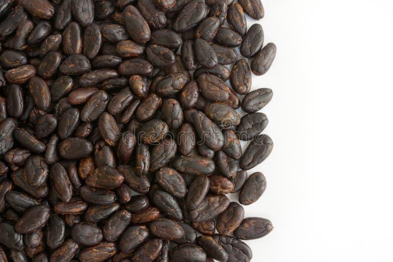 Kakaobohnen lizenzfreies stockbild