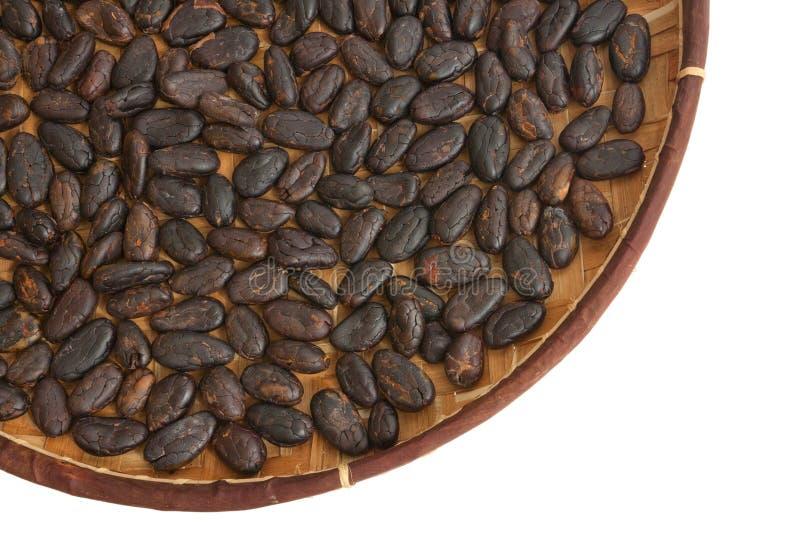 Kakaobohnen lizenzfreie stockbilder