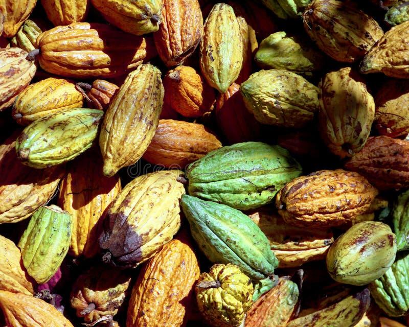 Kakaobohnen stockfotografie