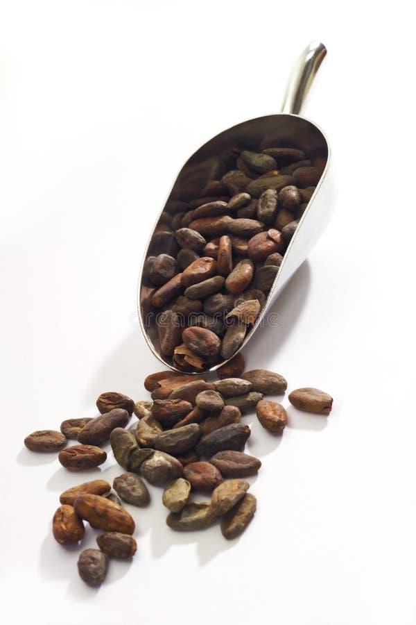 Kakaobohnen auf kleiner Schaufel lizenzfreies stockfoto