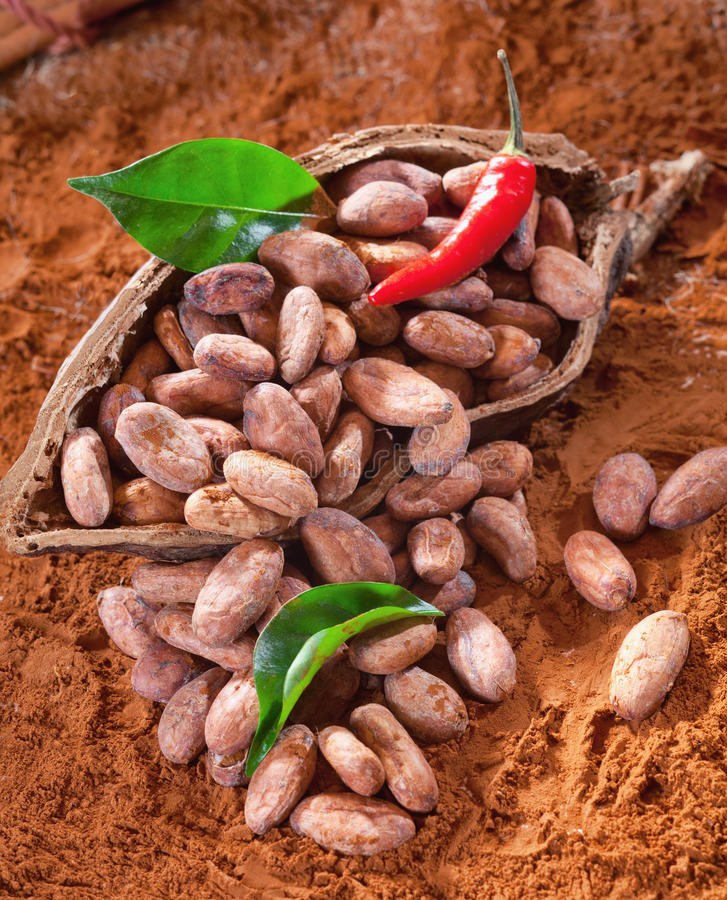 Kakaobohnen in einem Shell lizenzfreie stockfotos